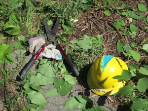 Shears and a hard hat from the site.