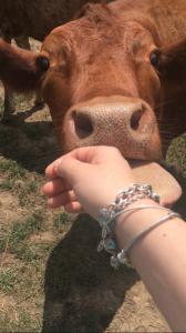 Erica's Cow